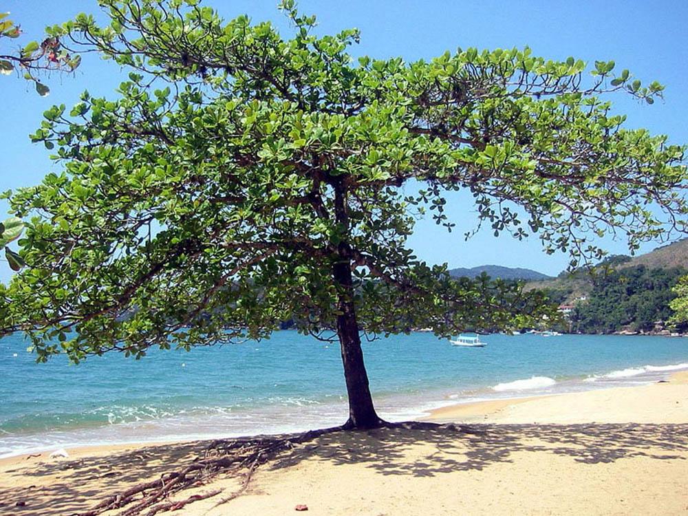 Praia Palmas - Ilha Grande - por christiane