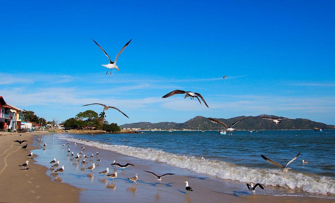 Praia de Zimbros - Bombinhas - por static-panoramio-com