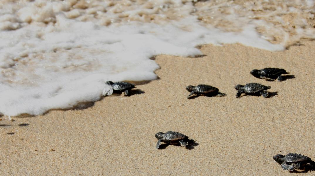 Praias de Aracruz - Espírito Santo - por InformeDeValor