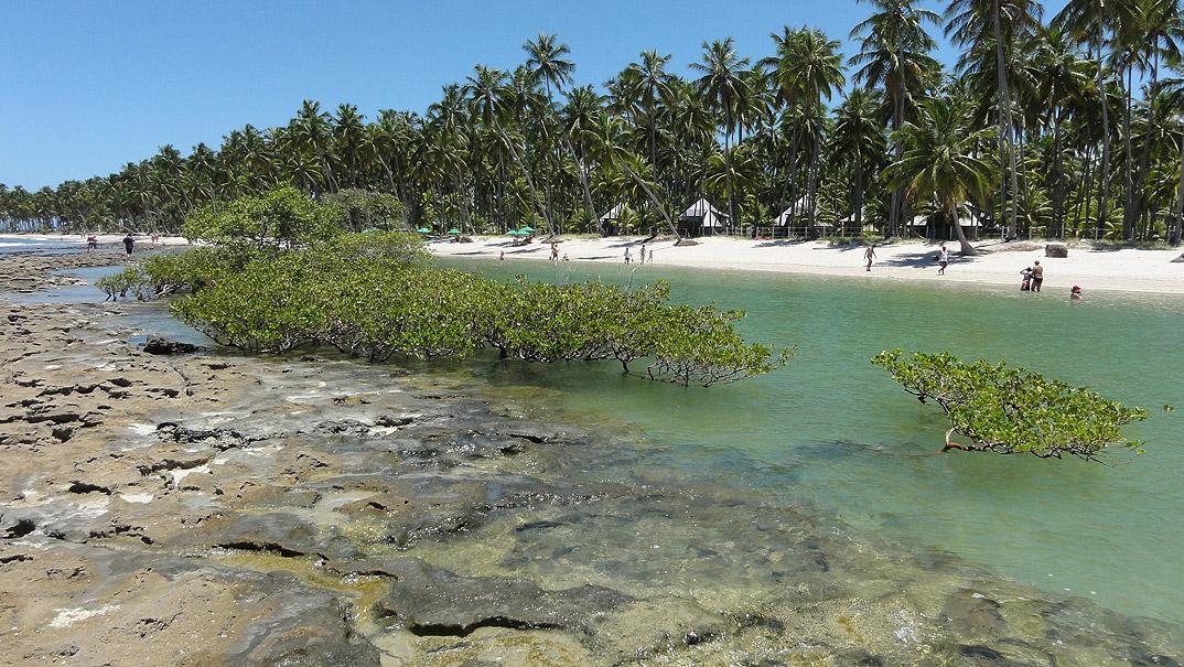 Praia dos Carneiros - Tamandare - Pernambuco - por engesoft